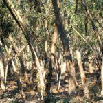 Las łatwopalny