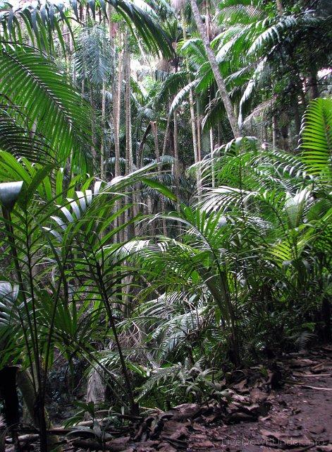 Tamborine National Park, sekcja Joalah