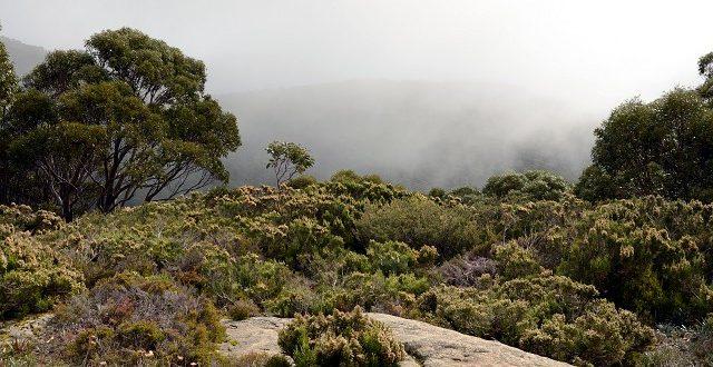 Smakowanie Alp Australijskich w Baw Baw