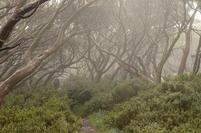 Baw Baw National Park, Wiktoria, Australia