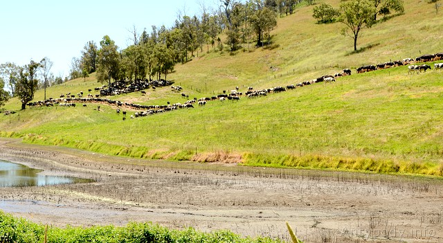 Tantawangalo Mount Road, Wielkie Góry Wododziałowe, NSW, Australia