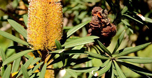 Spacerując po botaniku (3). Zaczyna się jesień.