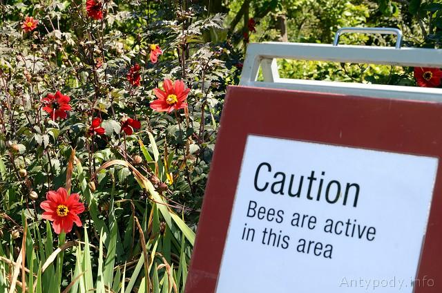 Ogród botaniczny w Melbourne, Australia