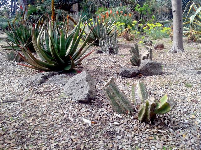 Wandale w ogrodzie botanicznym w Melbourne