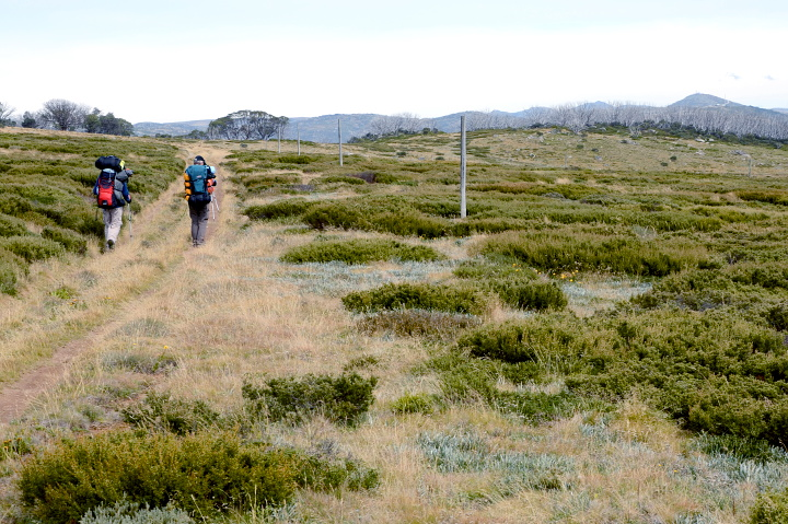 Na szlaku w Bogong High Plains