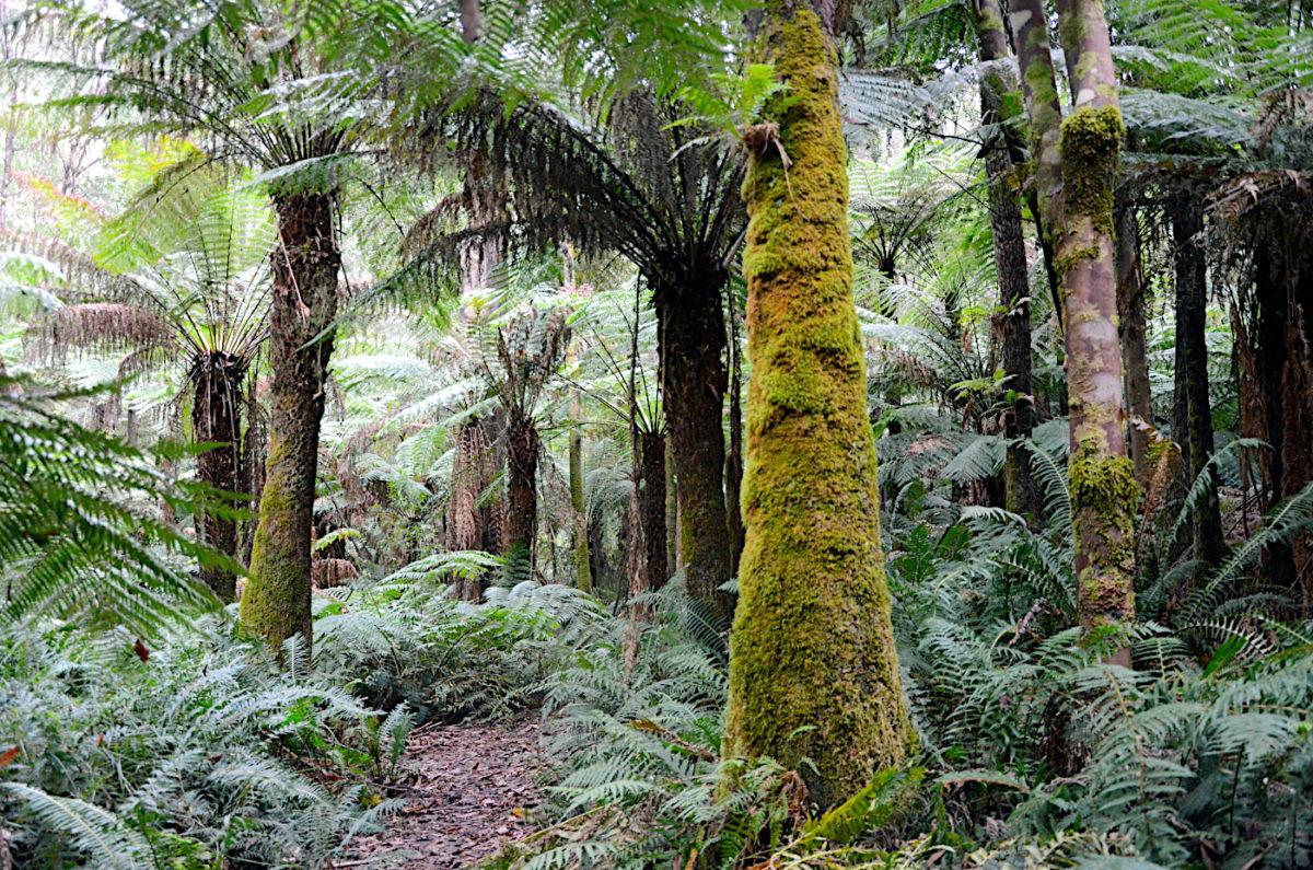 Reids Tramline - Yarra Forest